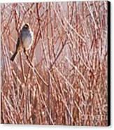 Little Sparrow Canvas Print by Sabrina L Ryan