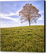 Lone Tree On The Hill Colour Canvas Print by John Farnan