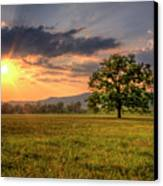 Lonely Tree In Field Canvas Print by Malcolm MacGregor