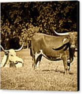 Longhorn Cows Rsting In Monochrome Canvas Print by M K  Miller