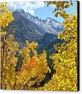 Long's Peak And The Keyboard Of The Winds Amidst Aspen Gold Canvas Print by Margaret Bobb