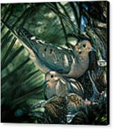 Love A Dove Dove Canvas Print by Chris Lord