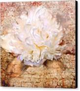 Love Letter IIi Canvas Print by Jai Johnson