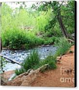 Magical Trees At Red Rock Crossing Canvas Print by Carol Groenen
