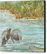 Manatee Canvas Print by Grace Ashcraft