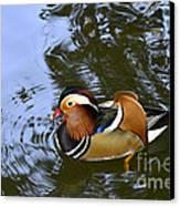 Mandarin Duck 04 Canvas Print by Arik Baltinester
