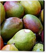 Mangoes Canvas Print by Methune Hively