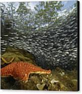 Mangrove Root Habitats Provide Shelter Canvas Print by Tim Laman