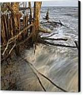 Mangrove Trees Protect The Coast Canvas Print by Tim Laman