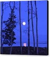 May Moon Through Birches Canvas Print by Francine Frank