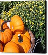 Mini Pumpkins Canvas Print by Kimberly Perry