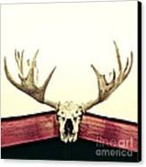 Moose Trophy Canvas Print by Priska Wettstein