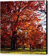 Morton Arboretum In Colorful Fall Canvas Print by Paul Ge