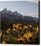 Mountain Flowers Canvas Print by Charles Warren