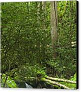 Mountain Stream Panorama Canvas Print by Andrew Soundarajan