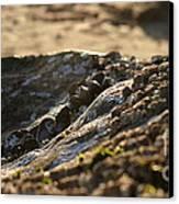 Mussels Sunset Canvas Print by Henrik Lehnerer