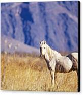 Mustang Canvas Print by Mark Newman and Photo Researchers