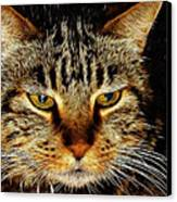 My Bored Cat Canvas Print by Mariola Bitner