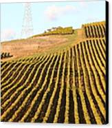 Napa Valley Vineyard . 7d9065 Canvas Print by Wingsdomain Art and Photography