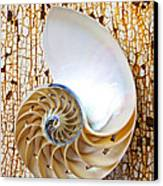 Nautilus Shell On Rusty Table Canvas Print by Garry Gay