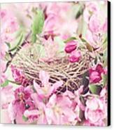 Nest In Soft Pink Canvas Print by Stephanie Frey