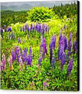 Newfoundland Meadow Canvas Print by Elena Elisseeva