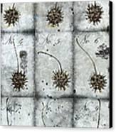 Nine Seed Pods Canvas Print by Carol Leigh