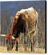 No Bull Canvas Print by Joyce Kimble Smith