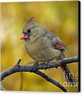 Northern Cardinal Female - D007849-1 Canvas Print by Daniel Dempster