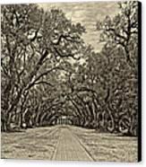 Oak Alley 3 Antique Sepia Canvas Print by Steve Harrington