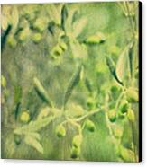 Olive And Leaf Canvas Print by Linde Townsend