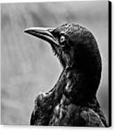On Alert - Bw Canvas Print by Christopher Holmes