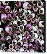 Onion Power Canvas Print by Susan Herber