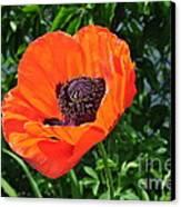 Orange Burst Canvas Print by Luke Moore
