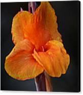 Orange Canna Lily Canvas Print by Melanie Moraga