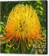 Orange Protea Flower Art Canvas Print by Rebecca Margraf