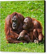 Orangutan Mother And Child Canvas Print by Gabriela Insuratelu