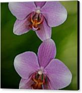 Orchid Delight Canvas Print by Adele Moscaritolo