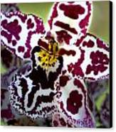 Orchid Flower Canvas Print by C Ribet