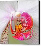 Orchids 10 Canvas Print by Becky Lodes
