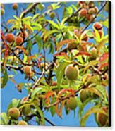 Organic Peach Tree, Canvas Print by Pete Starman