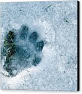 Otter Footprint In Snow Canvas Print by Duncan Shaw