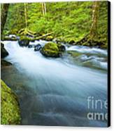 Out Of The Rainforest Canvas Print by Mike  Dawson