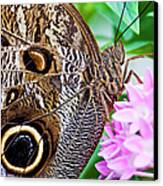 Owl Butterfly Canvas Print by Daniel Osterkamp