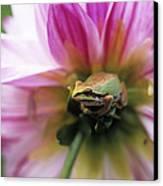 Pacific Treefrog On A Dahlia Flower Canvas Print by David Nunuk