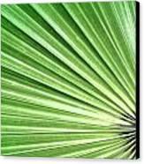 Palm Leaf Canvas Print by Rudy Umans