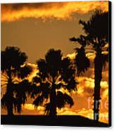 Palm Trees In Sunrise Canvas Print by Susanne Van Hulst