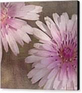 Pastel Pink Passion Canvas Print by Benanne Stiens