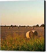 Peanut Field Bales 1 Canvas Print by Douglas Barnett