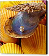 Pearl In Oyster Shell Canvas Print by Garry Gay